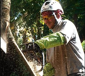 elagage arbre guadeloupe